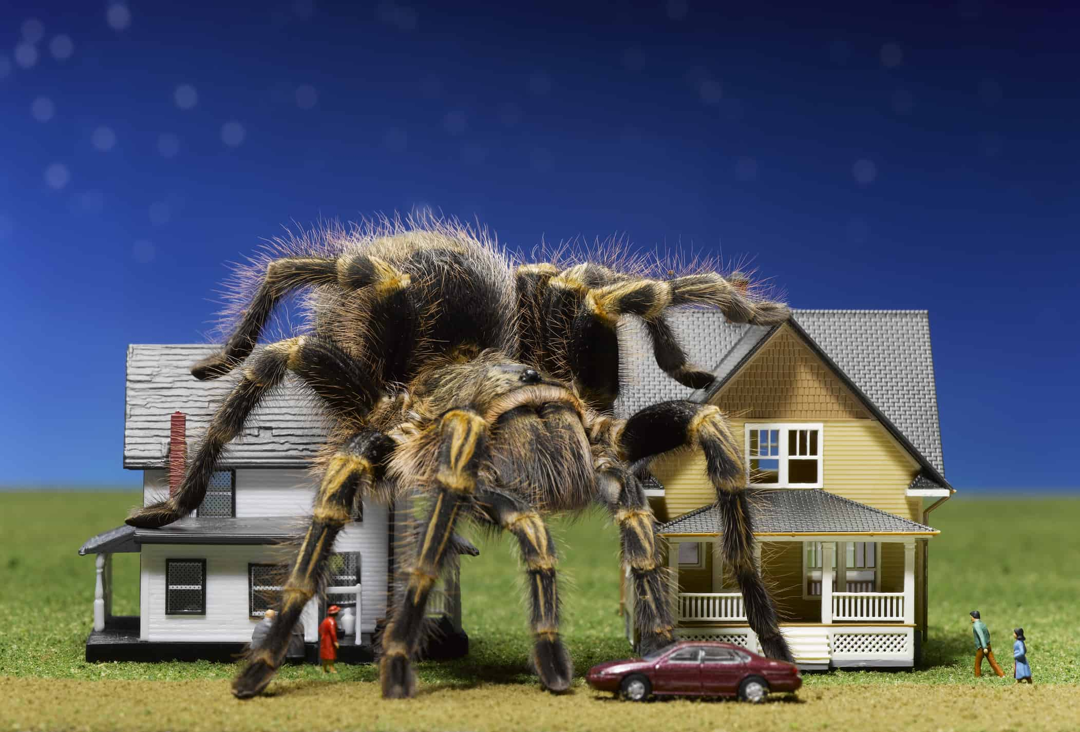 most common house spiders